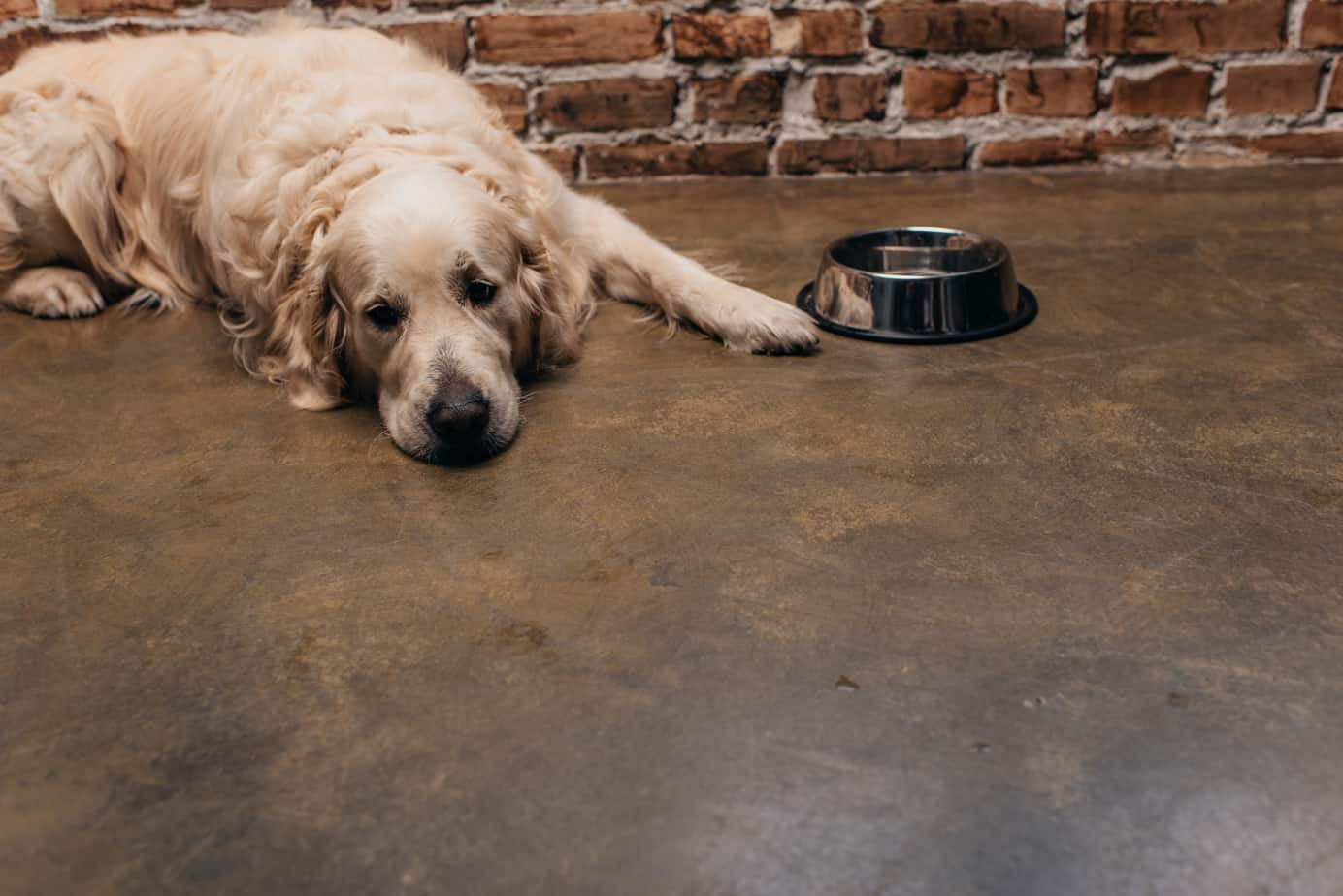 how long can a dog go without eating