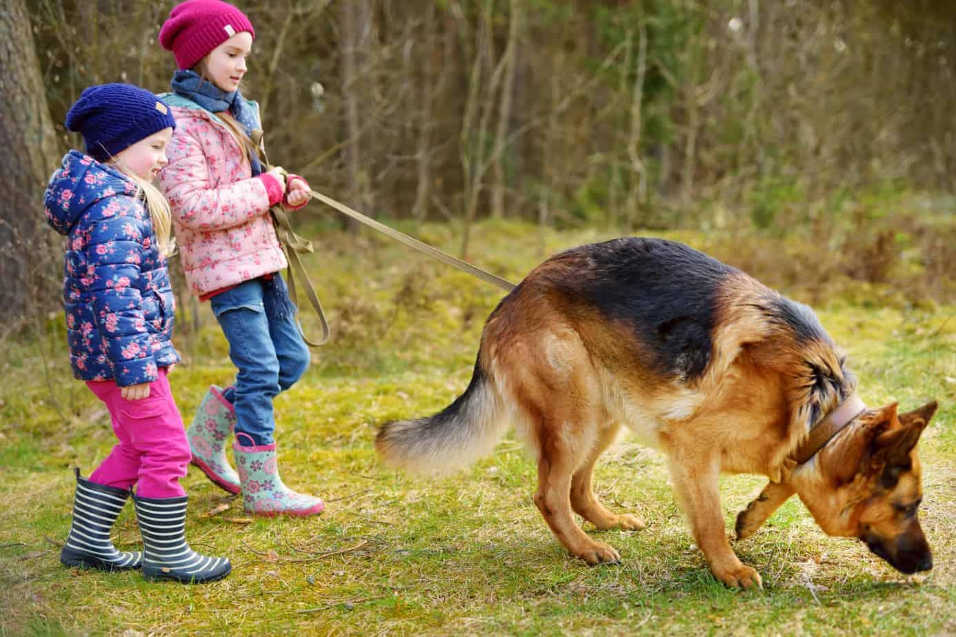 german sheperd good with children