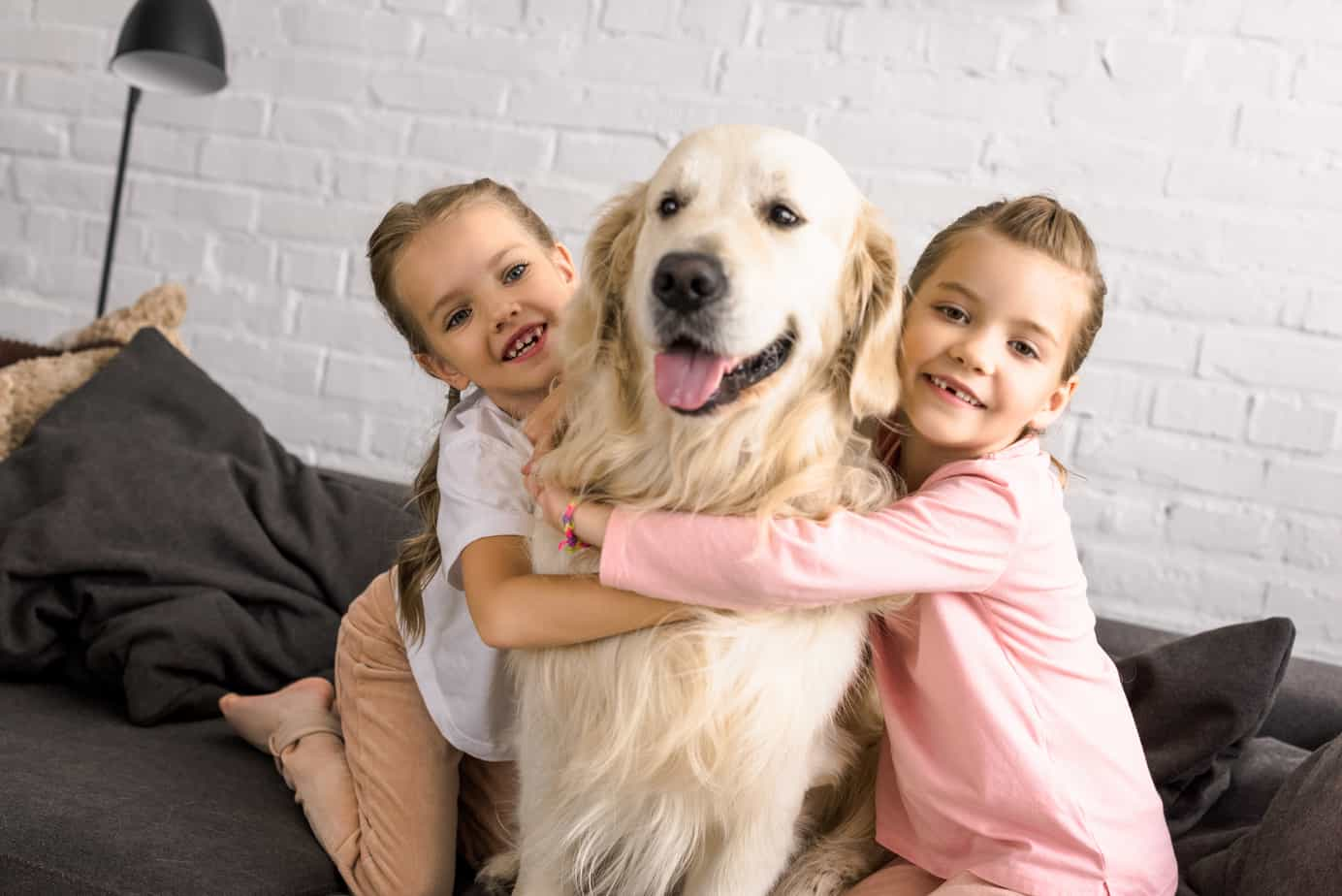 golden retriever benefits