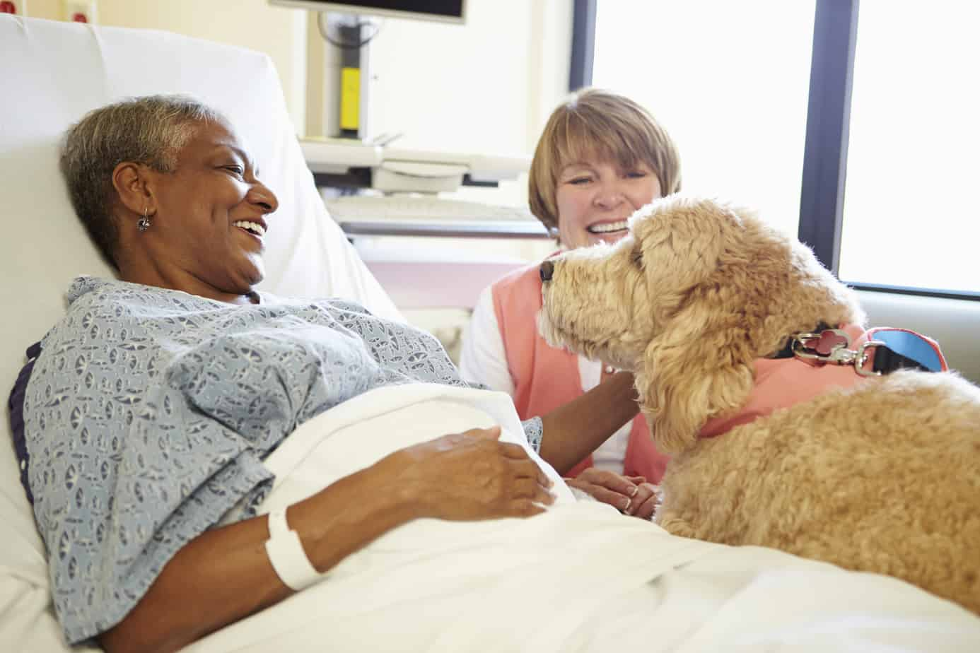 Goldendoodles also make great therapy dogs