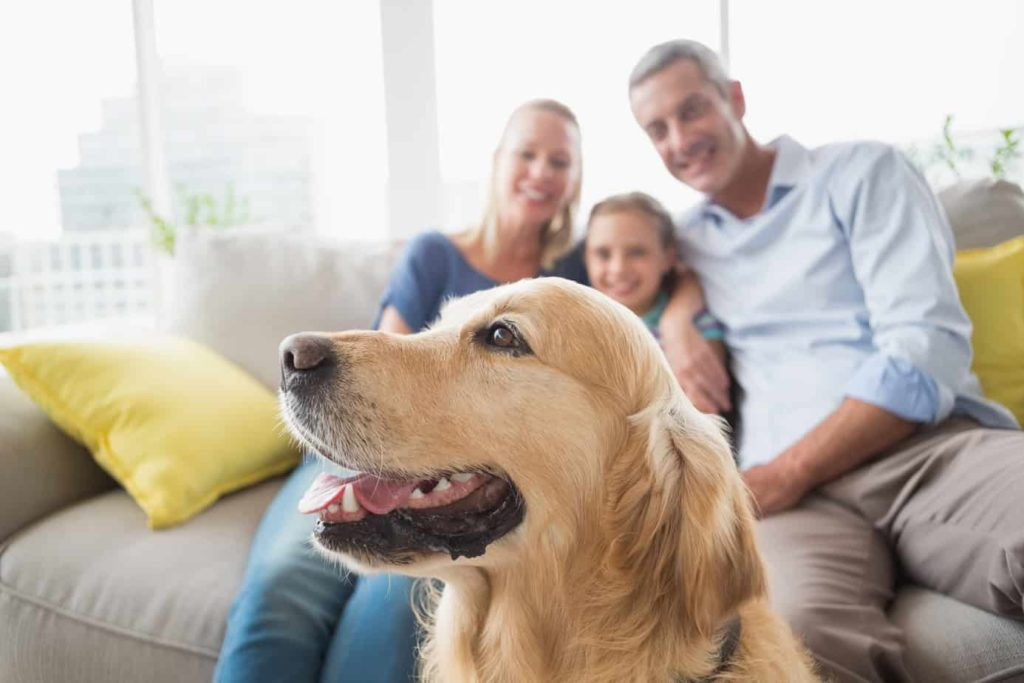 Golden Retriever with family in background at home