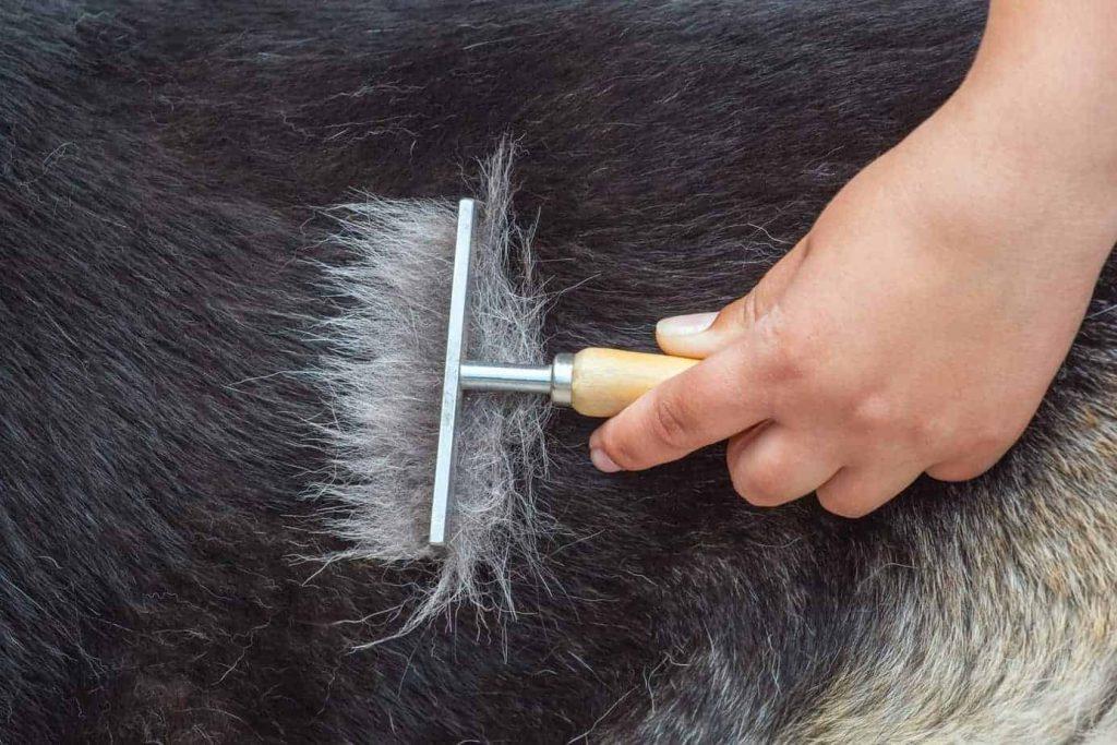 German Shepherd grooming brush